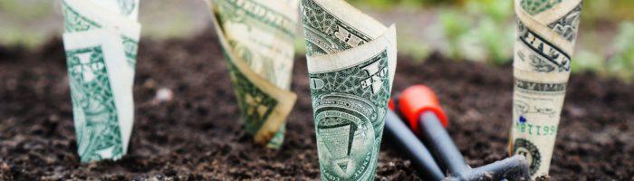 plantar dinheiro